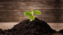 Healthy Soils - Compost, Mulch and the Soil Food Web Udemy Coupon & Review
